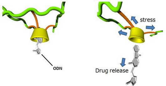Controlled-release-of-drug