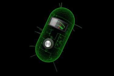 bacterialcalculation