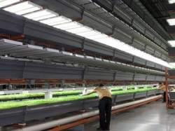Mega Vertical Farm