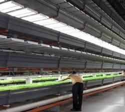 Сельское хозяйство будущего: как выращивать овощи без Солнца