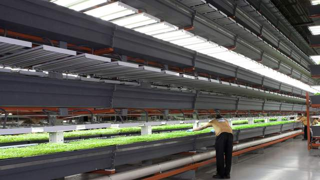 Mega Vertical Farm