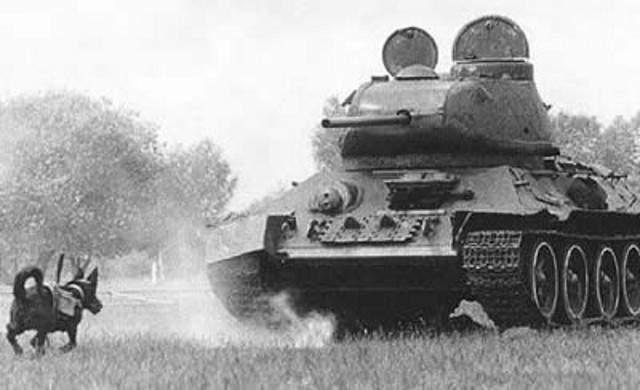 Советские «противотанковые» собаки