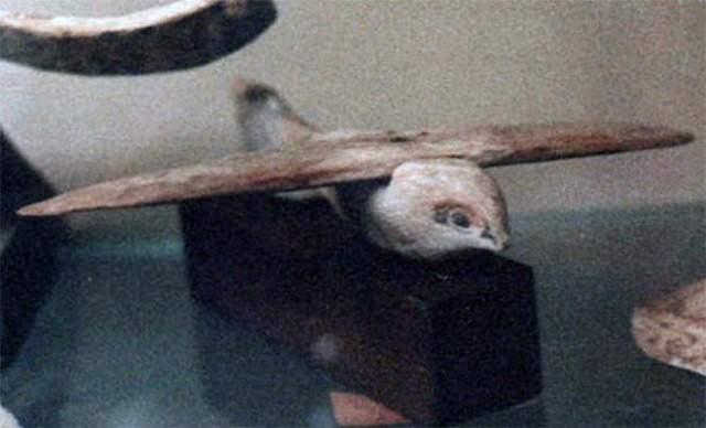 sakkara-bird