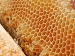 honeycomb_00305694