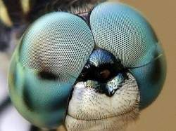 http://gearmix.ru/wp-content/uploads/2013/09/Macro-Photography-of-Insects-Eyes-5-250x187.jpg