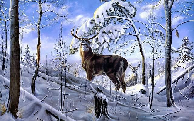 375726_olen_zima_les_sneg_derevya_art_1680x1050_(www.GdeFon.ru)