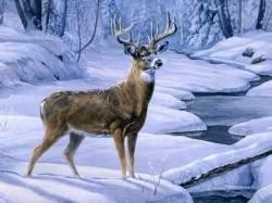 reindeer-in-snowdeer-animal-creek-forest-winter-snow-reindeer-wallpapers-photos-2s3ekcru