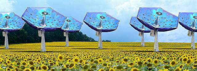 xsunflower2000a.jpg.pagespeed.ic.7bSLf09yul