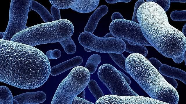 microorganism-bacteria