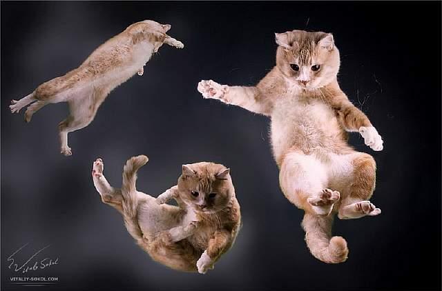 Почему кошка падает на лапы - простые ответы на