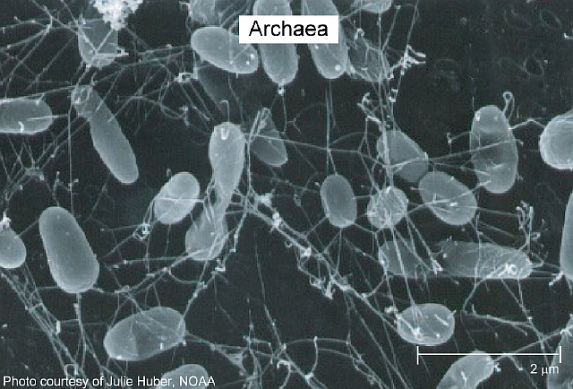 microbes_archaea_lge