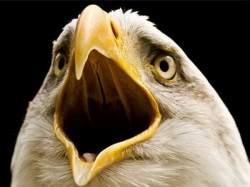 Bird-beak-590x3301