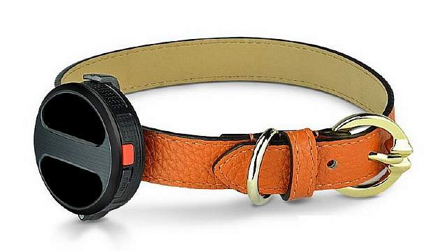 haier-smart-dog-collar-900x600