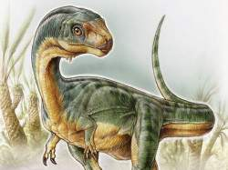 Image: University of Birmingham handout illustration shows an artist's depiction of the Chilesaurus diegosuarezi
