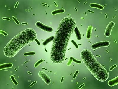 Исследователи из Израиля установили: Бактерии-зомби могут убивать другие микроорганизмы