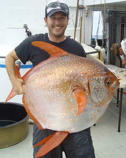 Встречайте: В океане найдена первая в мире теплокровная рыба