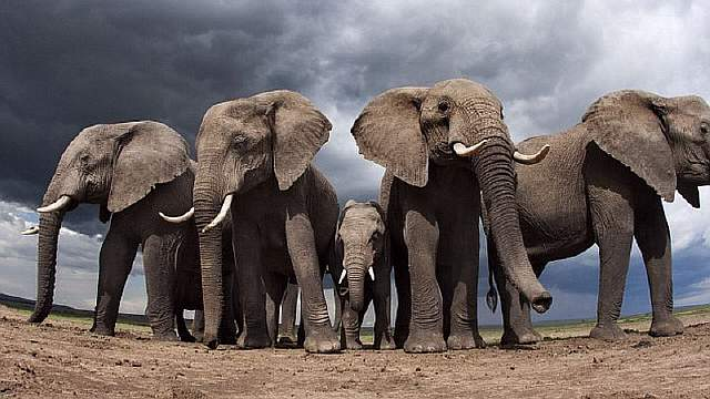 На Земле официально объявлено начало шестого массового вымирания