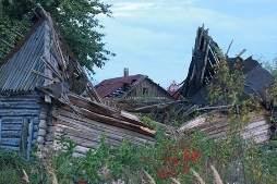 Дикая природа в Чернобыльской зоне процветает
