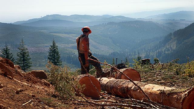 logging-lone-logger290y00731-750xx1000-563-0-52