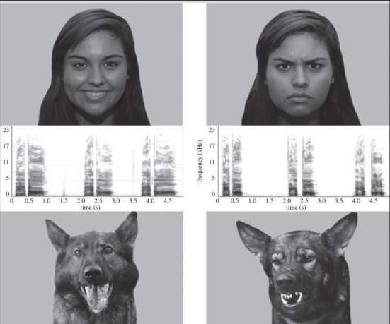 Собаки могут читать человеческие эмоции по выражению лица и голосу