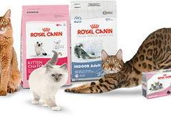royal-canin-cats-foods-zooventaru