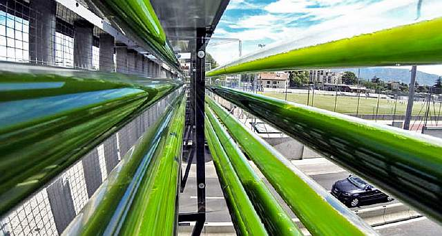1-urban-algae-farm-1
