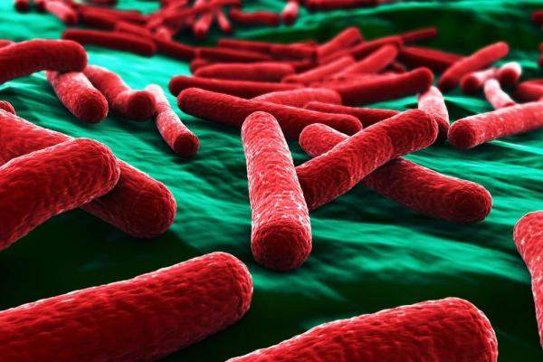 Study-New-material-kills-E-coli-bacteria-in-30-seconds