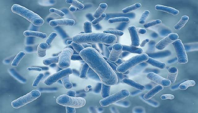 503027-bacteria