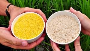 Свыше 100 нобелевских лауреатов убеждают Greenpeace поддержать ГМО