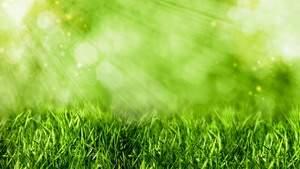 С помощью солнца и дешевого катализатора обычную газонную траву удалось сделать источником возобновляемой энергии