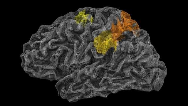 """Местонахождение """"физического движка"""" в мозгу"""