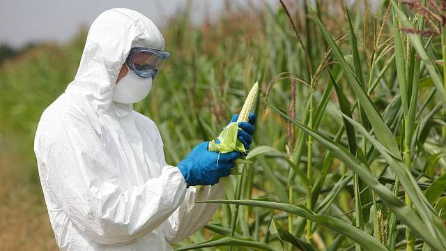 Результаты самого масштабного исследования в области ГМО