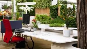 Растения в офисе способствуют удовлетворенности персонала и повышают производительность труда
