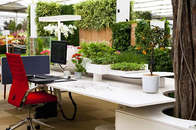 office_plants