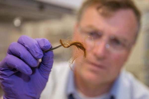 Подпись к изображению: Биохимик центра судебной медицины Ливерморской национальной лаборатории Глендон Паркер изучает 250-летний образец волос