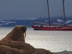walruss-flickr-rob-oo