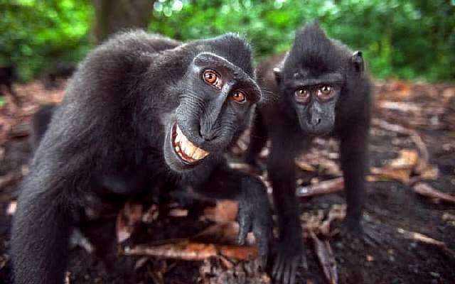 js115432690_tangkoko-national-park-2-large_transeo_i_u9apj8ruoebjoaht0k9u7hhrjvuo-zlengruma