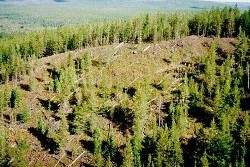 3C6A765900000578-0-According_to_local_reports_traces_of_the_mysterious_Tunguska_eve-a-33_1485162075840