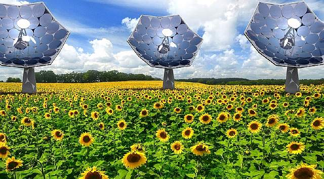 4-ibm-solar-sunflower