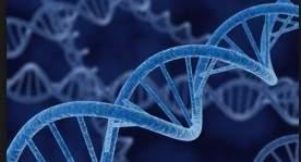 Учёные создали полусинтетический организм