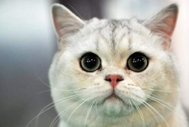 Ученые доказали, что кошки неглупее собак