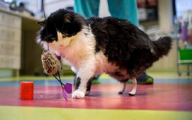 kitty-large_trans_NvBQzQNjv4Bq2F9SN3_GD3xfprQy3WBbygOzhdxU7ne7IueKqNYKSf0