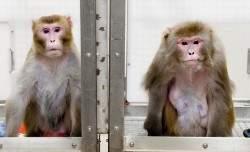 monkey_diet_study09_5657-1-775x516