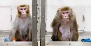 Правильная диета не только улучшает, но и продлевает жизнь обезьян