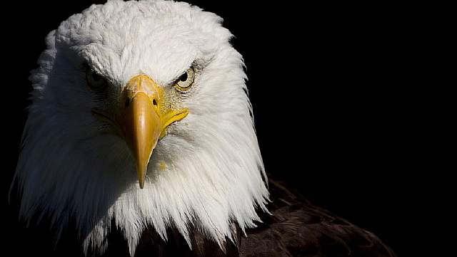american-eagle-013