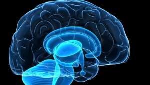 brain_3555818a-large_trans_NvBQzQNjv4BqqVzuuqpFlyLIwiB6NTmJwfSVWeZ_vEN7c6bHu2jJnT8