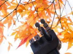 robot-hand-touching-red-leaves-picture-id626552778