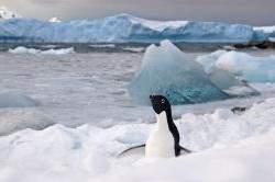 An Adélie penguin taken at Rothera Station on the Antarctic Peninsula