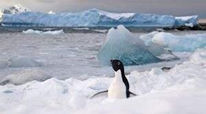Антарктика загрязнена намного сильнее, чем думали