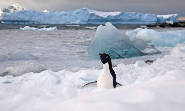 An Adélie penguin taken at Rothera Station on the Antarctic Peninsula